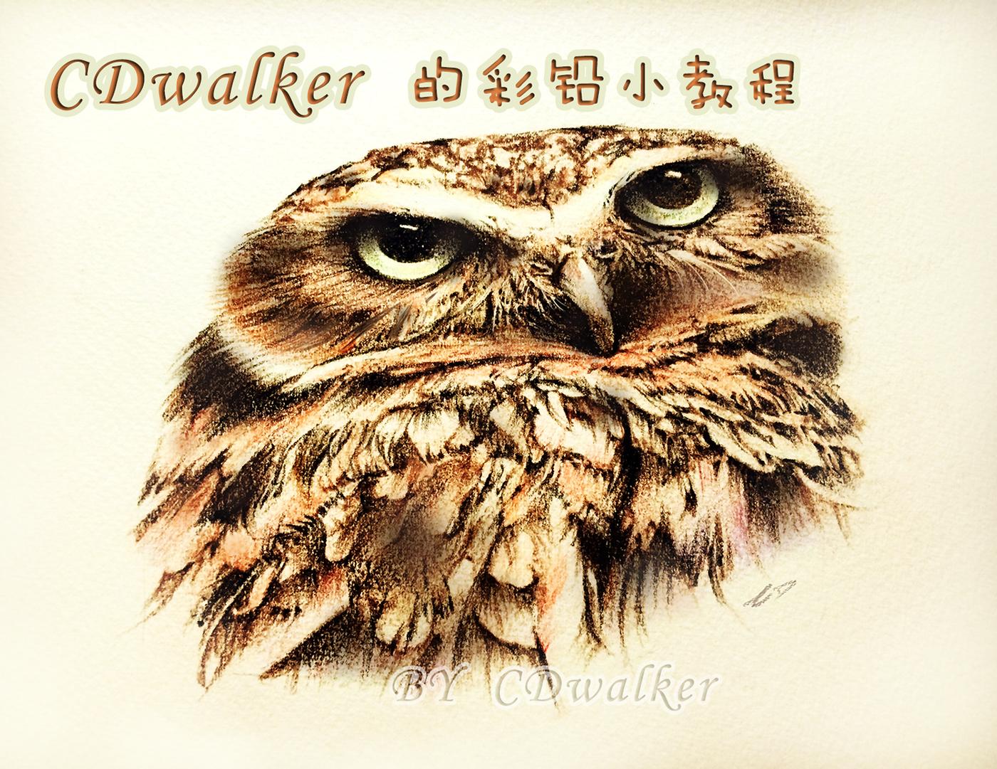 【绘画教程】原创:彩铅猫头鹰教程~~第一次写qaq