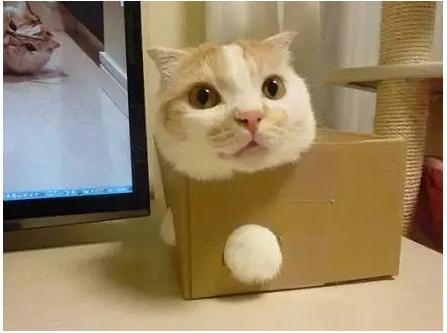 废旧餐巾纸盒做动物
