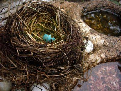 国学】【世语】言语第二 覆巢之下焉有完卵_橱