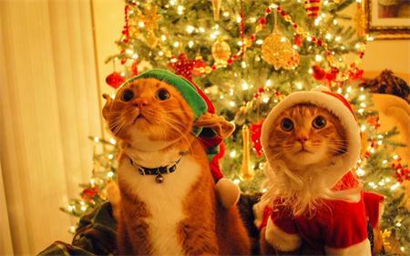 【活动】メリークリスマス 大家一起玩绕口令