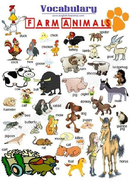 各类动物的英文词汇大全!_沪粉天地_其他-沪江