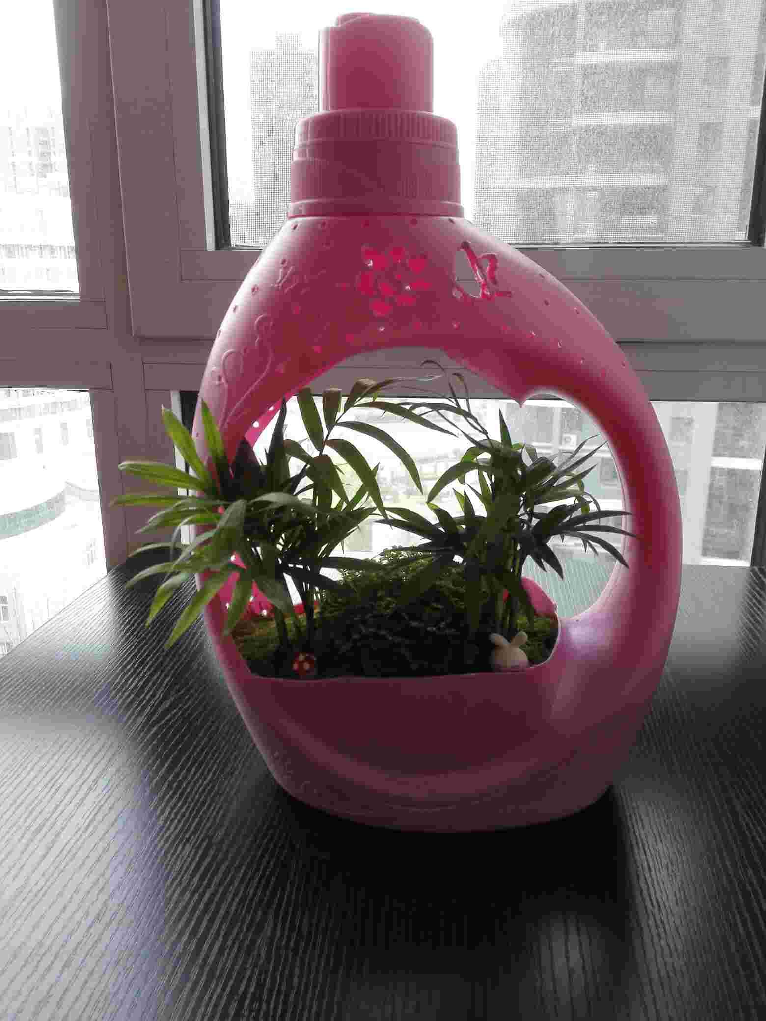 洗衣液瓶创意花盆图片_洗衣液瓶创意花盆制作图片