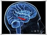 【心理学社】20140830活动预习贴——行为の生物学基础(本周继续)