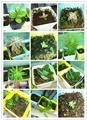 【自然之恋】某瑞の花园展示
