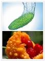 苦瓜怎样做才能不太苦,这是纠结在很多减肥人群中的口味问题