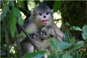 140914,其实这个我想知道很久了……我想了解滇金丝猴!!!