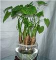 多适用于室内的植物一览(内含养殖方法)