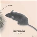 【儿童自然百科】看看小鼠是怎么长大的!