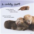 【儿童自然百科】看看小猫是怎么长大的