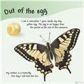【儿童自然百科】看看蝴蝶是怎么长大的