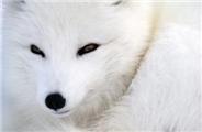 狐狸大百科~
