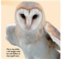 【儿童自然百科】看看猫头鹰是怎么长大的