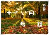 【十一月专题】却道天凉好个秋~