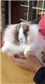 13 张图告诉你兔子是不能被低估的宠物~