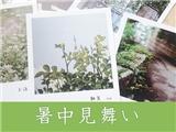 【跟外教学本土沙龙网上娱乐】第二十九期:暑期问候(已奖励)