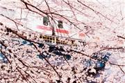 阿部ちゃんの宿題くん19:赏樱