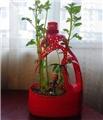 """废物利用:高手用洗衣液瓶做成""""花盆"""""""