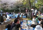 【ゆか带你看日本】第二十二期:日本的赏花季