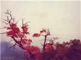 【设计参赛】 这世界温暖美好,时光都知道——苏叶Lee