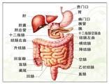 慢性篇 の 肠炎