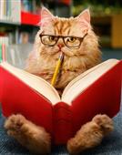 """猫咪""""豆知识"""""""