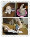 【ゆか带你看日本】第二期:日本的人气宠物(已奖励)
