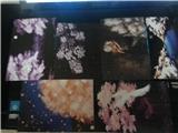 【杂货铺子】互寄明信片---熊猫--11/16跟新 厦门的片片 16L