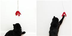 14 款逗猫神器,征服世上所有猫咪!