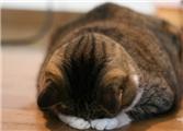 2014.05.01【日译中】【仙女姐姐的小花园】 其实读错了!这些沙龙网上娱乐词你知道吗?(四)