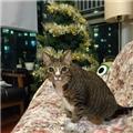 【喜糖】们圣诞快乐^.^