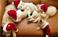 【ゆか带你看日本】第十四期:日本的圣诞节