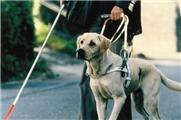 【日影视频】导盲犬小Q