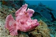 【The Big Blue】神奇古怪的海底生物(上)