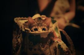 【福利贴】节后happy~一起来收礼物!(活动已结束)