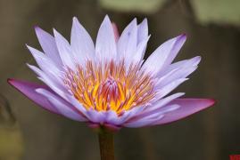 随手拍⑥:迷恋植物