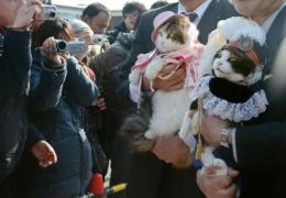 """日本""""猫站长""""迎上任8周年 带动铁路经济发展"""