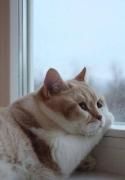 萌萌的肥猫什么的~最有爱了~