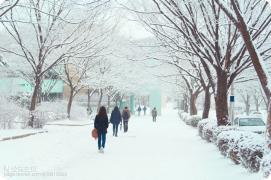 【韩国校园美景】这儿是宋仲基&文根英的母校 — 成均馆大学(自然科学校区)