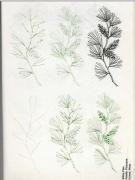 【资源放送】:50种花的画法(系列教材周更)