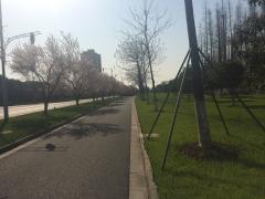 阳春三月,骑行好时节!