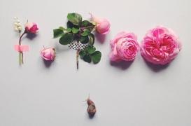 【春天不远】有个法国姑娘,让花儿自己开口说话了~