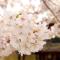 日语学习经验