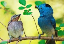 【每天学一个词根】avi = 鸟