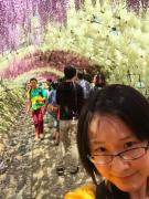 水彩画般-河内藤園-Alice❤️2015/5/2