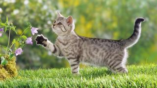 """【沙龙国际盒饭】猫咪""""豆知识""""第二季——养猫之前的""""豆知识""""(补全)"""