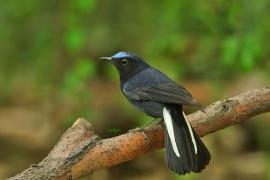 【科普向】那些鸟儿,华师校园里常见的四十种鸟类【二】