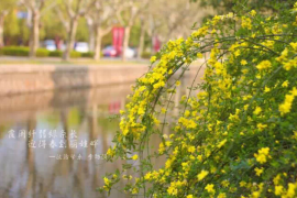 在华东师大你不知道的校花(五)连翘、迎春花、红梅、丁香