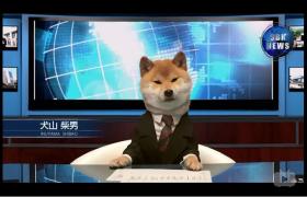 【漫谈社】柴犬播报SBK社新闻