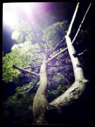 《夜美丽》