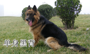 【江湖客栈】11种单身狗的分类,快来看看你是哪一种?